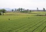 江西良好农业规范(GAP)认证  公司iso体系认证
